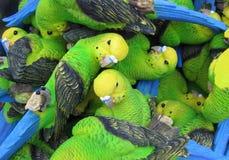 Pappagalli Fotografie Stock
