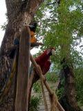 2 pappagalli Fotografia Stock Libera da Diritti