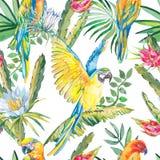 Pappagalli e fiori esotici Modello senza cuciture dell'ara Fiore attuale, pitaya delle foglie Dragonfruit Fotografie Stock Libere da Diritti