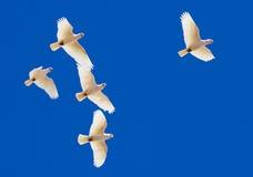 Pappagalli sotto cielo blu Fotografia Stock Libera da Diritti