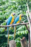2 pappagalli sul ramo di albero in uno zoo Fotografie Stock Libere da Diritti