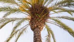 Pappagalli sulla palma immagine stock
