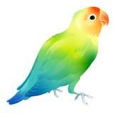pappagallo illustrazione di stock