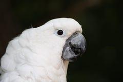 pappagallo Fotografie Stock Libere da Diritti