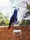 Pappagallo allo zoo Immagini Stock Libere da Diritti