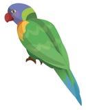 Pappagallo del fumetto - lorikeet dell'arcobaleno - isolato Fotografie Stock Libere da Diritti
