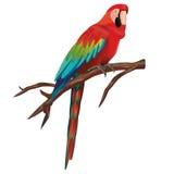 Pappagallo del Macaw Immagini Stock