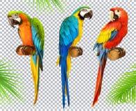 Pappagallo dell'ara macaw insieme dell'icona di vettore 3d