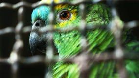 Pappagallo di Amazon Fotografia Stock Libera da Diritti