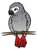 Pappagallo di grey africano - illustrazione Immagini Stock Libere da Diritti