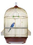 Pappagallo in gabbia Immagini Stock