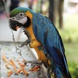Pappagallo in giardino zoologico immagine stock libera da diritti