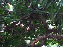 Pappagallo su un albero immagini stock libere da diritti