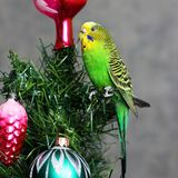 Pappagallo su un albero del nuovo anno immagini stock libere da diritti