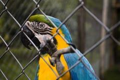 Pappagallo in uccelliera immagine stock libera da diritti