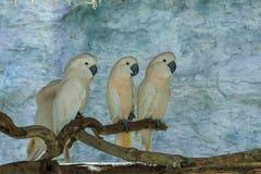 Pappagallo, uccello Fotografie Stock