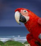 Pappagallo verde del macaw dell'ala Fotografie Stock