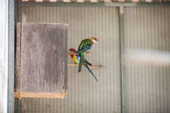 Pappagallo in zoo Immagine Stock Libera da Diritti