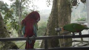 Pappagallo in zoo, natura dell'ara, selvaggia, ala, ara, illustrazione, fauna selvatica, tropicale, animale archivi video