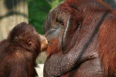 pappan ger kyssen Royaltyfri Bild
