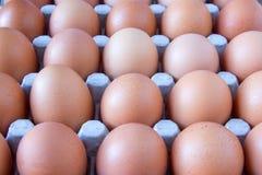 Pappe voll von Eiern Stockfotos