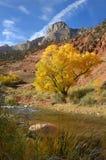 Pappel-Baum Stockbild