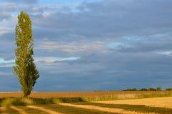 Pappel-Schatten Lizenzfreie Stockfotografie