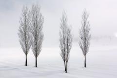 Pappelbäume in der weichen, ruhigen Umwelt in der Winterzeit Lizenzfreies Stockfoto