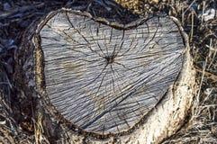 Pappelbäume geschnitten von der Unterseite, geschnittene Baummuster Lizenzfreie Stockbilder