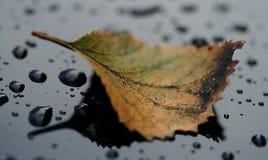 Pappelblatt auf den Oberflächen-mokrots Lizenzfreies Stockfoto