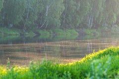 Pappelflaum über dem Fluss Lizenzfreie Stockbilder