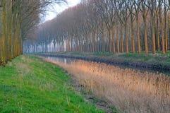 Pappeln in Damme, Belgien, Europa Stockbilder