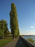 Pappeln im Herbstpark nahe Fluss Stockbild