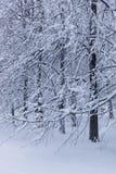 Pappeln im verschneiten Winter Lizenzfreie Stockbilder