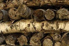 Pappelpappelbrennholz Stockbilder