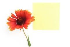papper för blommaleaforange royaltyfri bild