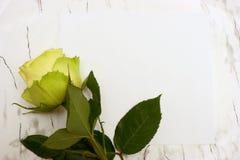 papper för den blanka leafen steg Arkivfoton