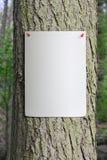 papper klämmd fast affisch till treestammen Royaltyfria Bilder