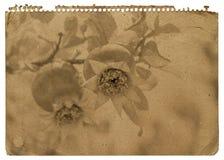 Pappers- anteckningsbok Royaltyfri Foto