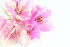 Pappers- blomma Royaltyfri Fotografi