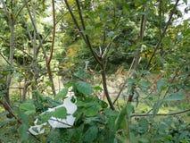Pappers- dundersuccé i skogen på slingan Royaltyfria Bilder