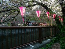 Pappers- lyktor tände i aftonen under festival för körsbärsröd blomning på den Meguro floden royaltyfria foton