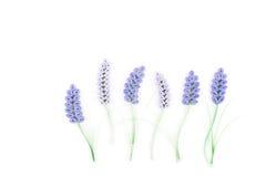 Pappers- quilling som är färgrik skyler över brister blommor Arkivfoton