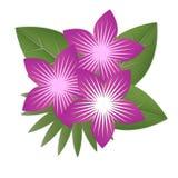 Pappers- tropiska blommor Lilablommor som omges av gröna tjänstledigheter Arkivfoto