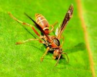 Pappers- Wasp royaltyfri foto
