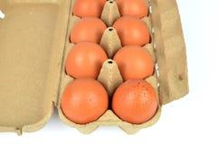 Pappschachtel Eier Lizenzfreies Stockbild