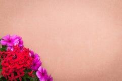Papptextur i bakgrunden med röda blommor och rosor i hörn Utrymme som sätter textmeddelandet Arkivbild