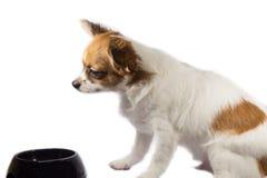 Pappy-Hund Stockfotos