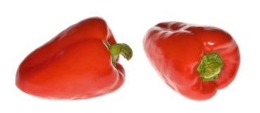paprica红色 库存图片