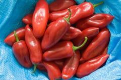 Paprica rossa Fotografie Stock